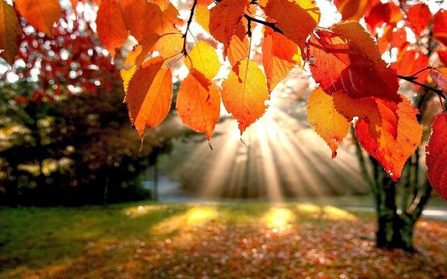 trees-autumn-leaves-fall-sunlight-landscapes-nature-900x1440