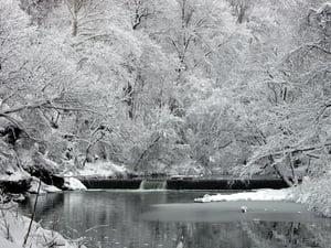 Fairmount Park Winter